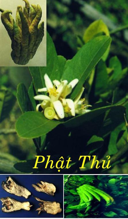 phat thu
