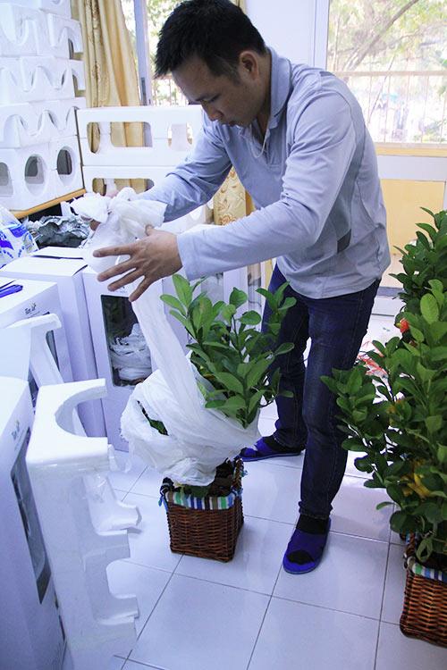 Việc bảo quản và di chuyển phật thủ được chủ vườn chăm sóc, chuẩn bị kỹ lưỡng.