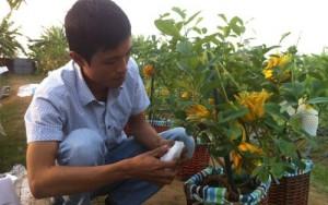Phật thủ 'độc' của nông dân Hoài Đức