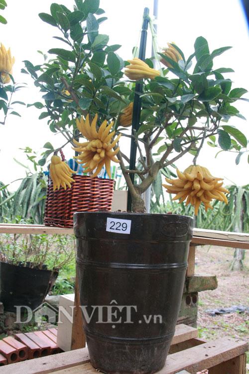 cay phat thu bonsai 2