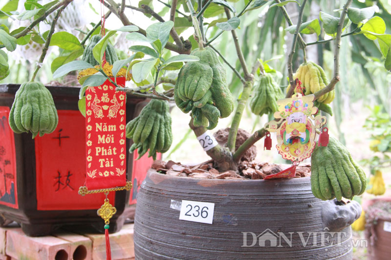 cay phat thu bonsai 3