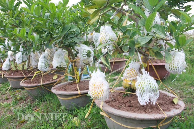 cay phat thu bonsai 6
