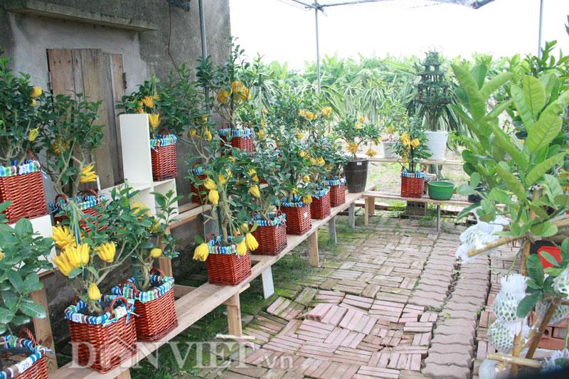 Vài năm trở lại đây, người tiêu dùng có xu hướng hướng tới những món quà Tết độc đáo, lạ mắt đặc biệt là các loại hoa quả, và cây cảnh thuần Việt mang nhiều ý nghĩa tâm linh và hình dáng khác lạ.